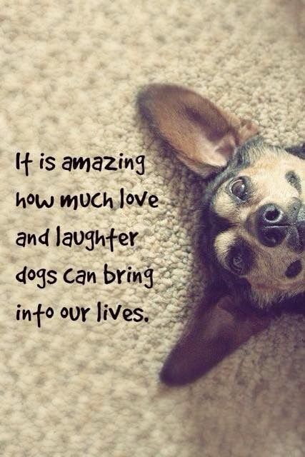 Adopt a rescued dog today <3