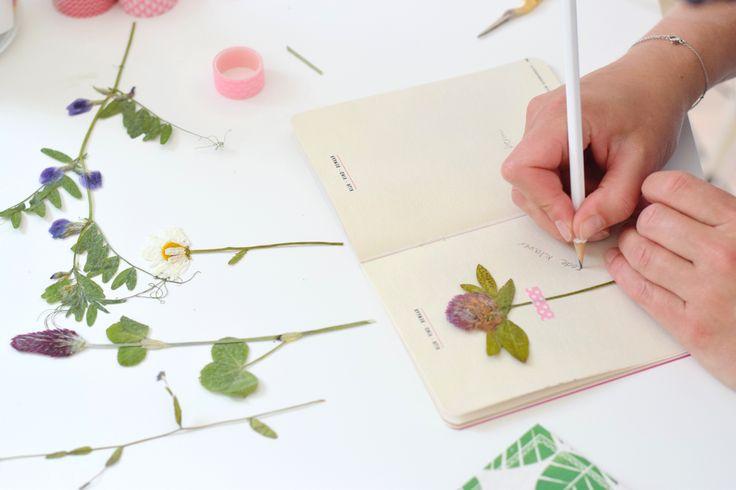 Herbarium | Wimke | DIY (do it yourself) | eenvoudige recepten | uittips