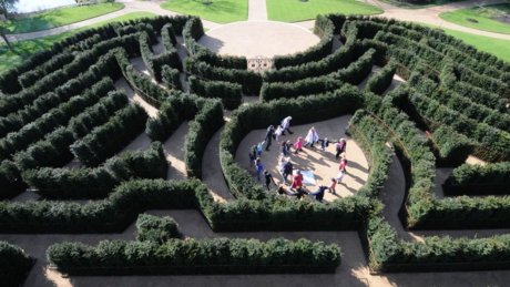 The new maze at Cliveden © Clare Kendall