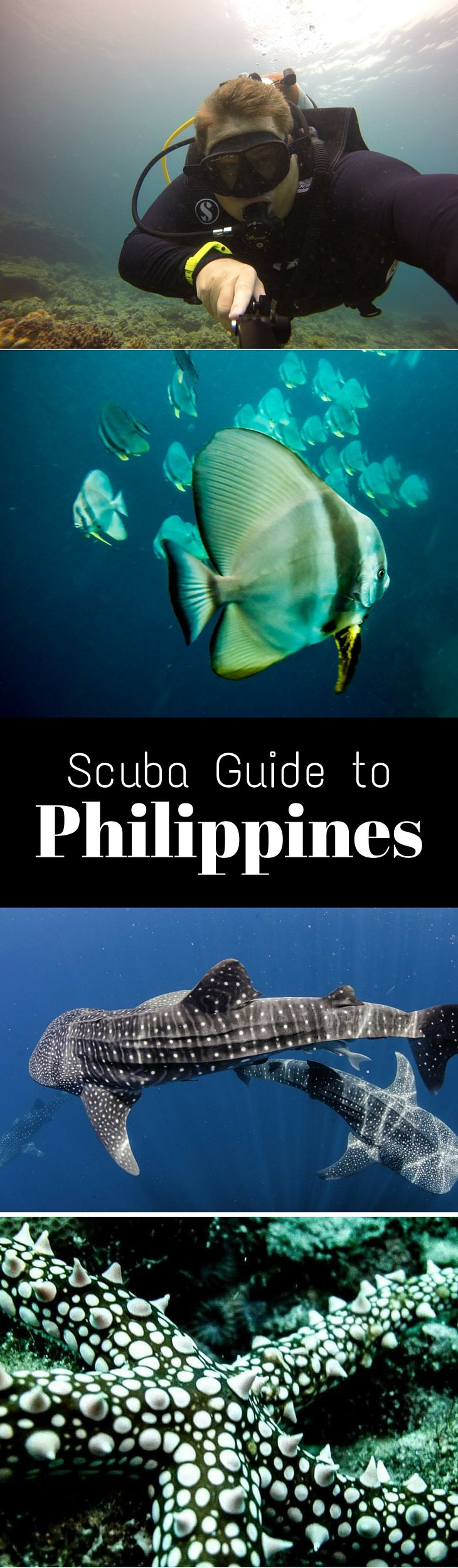 The Ultimate Guide to Scuba Diving Philippines | Art of Scuba Diving