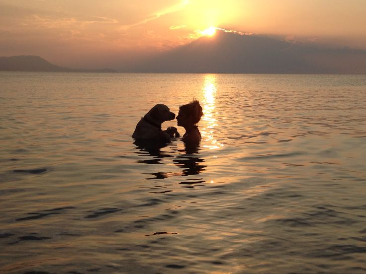 ELviS ,Labrador , sunset in the sea , unconditional love..