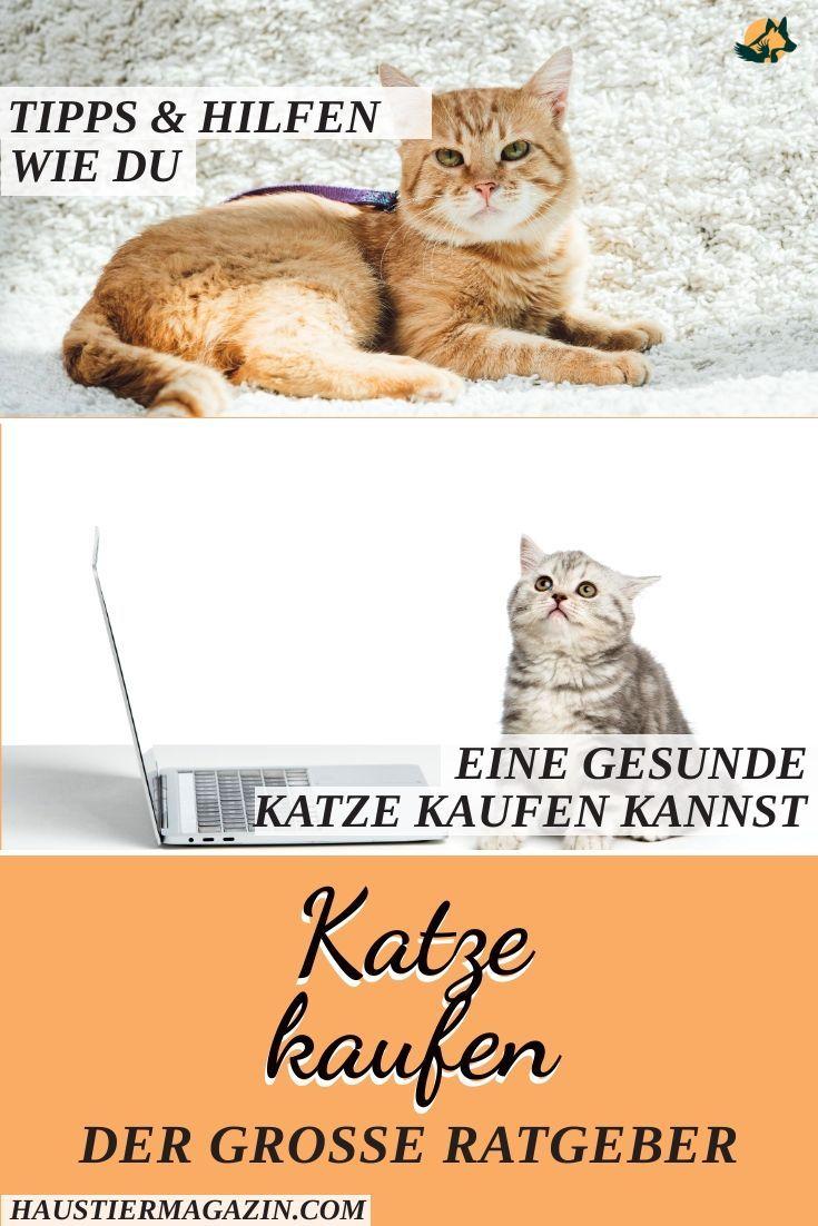 Katze Kaufen Das Solltest Du Beachten Haustiermagazin In 2020 Katzen Kaufen Katzen Tiere