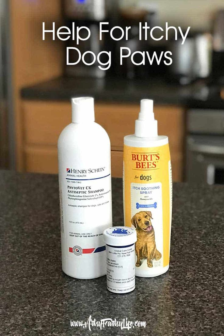how to treat dog itchy paws