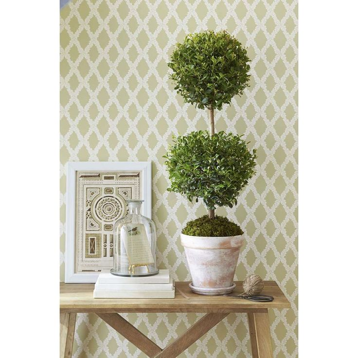 Shop 1.75-Quart Eugenia Topiary (L20938HP) at Lowes.com