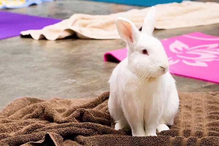 Bunnies, yoga, and wine at the San Diego House Rabbit Society