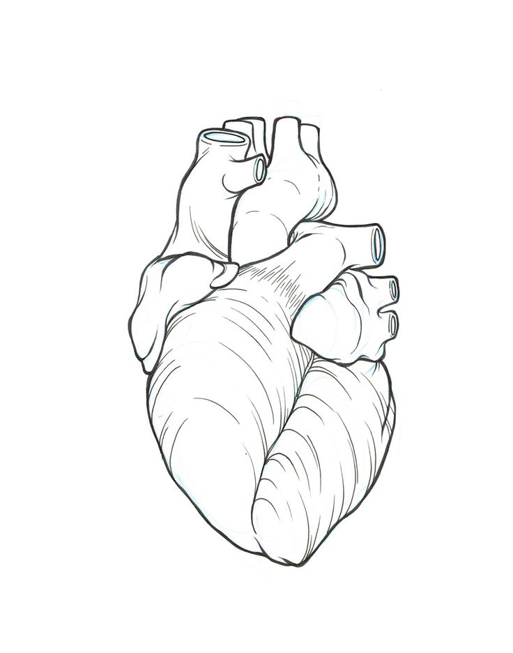 anatomical heart outline - Google Search