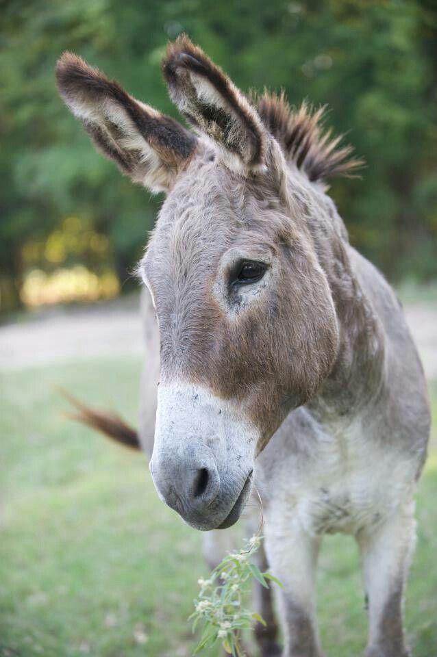 Donkeys: love ,love, so sweet