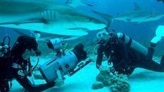 Les requins de la colère - myCANAL. Dernière occasion de voir ce Doc. Animalier, samedi 11/04 à 20h50 sur Canal+ décalé. A voir absolument. http://www.mycanal.fr/guide/programme/4839913-les-requins-de-la-colere.html
