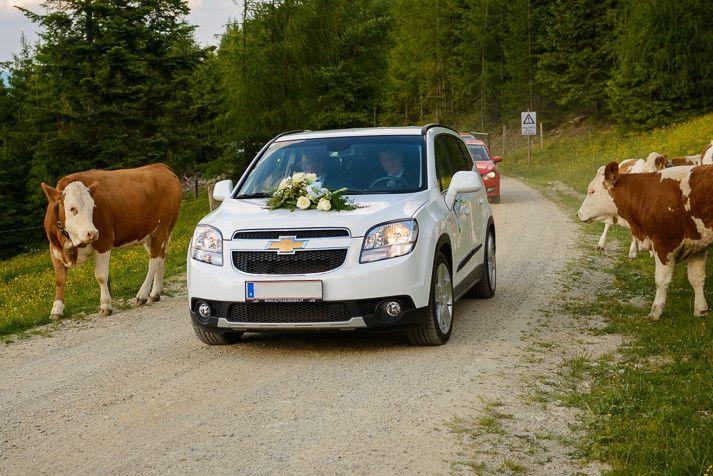 Da schauen selbst die Kühe...