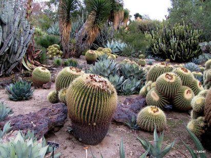 Jardín de secano