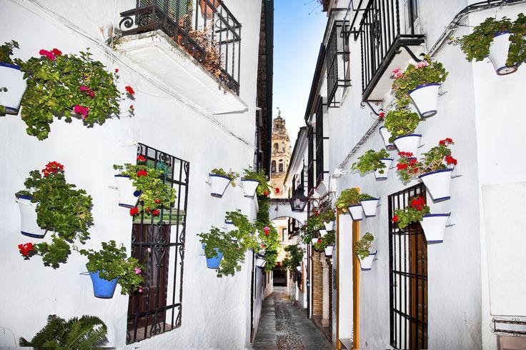 Viele Häuser in der Altstadt von Córdoba sind mit Blumen geschmückt.