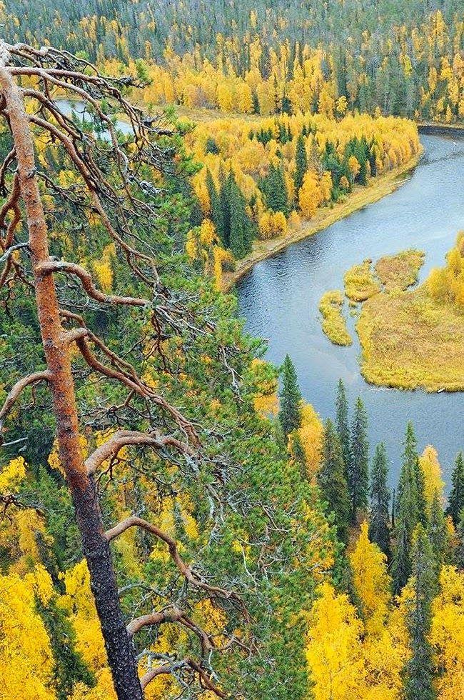 Le Parc National de l'Oulanka à Kuusamo Finlande