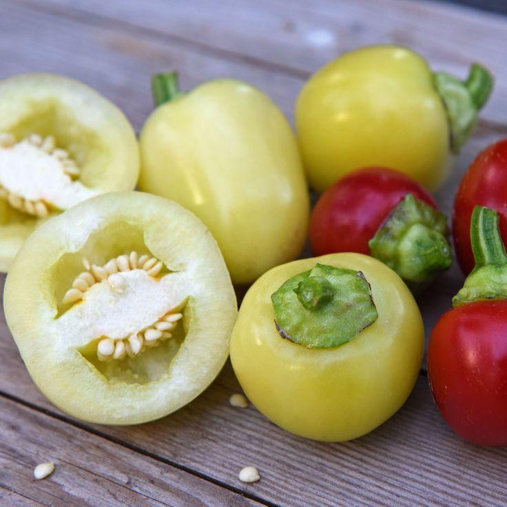 Tomatliknande, lätt hjärtformade, vita frukter som övergår i rött vid full mognad. Söt och krispig med tjocka väggar, mycket god både färsk och tillagad. Fyllda och ugnsbakade blir de perfekta till mingelsnittarna m.m.