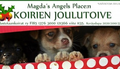 Magda´s Angels Placen koirien joulutoive - Magda's Angels Place dogs Christmas wish - Pelastetaan Koirat ry