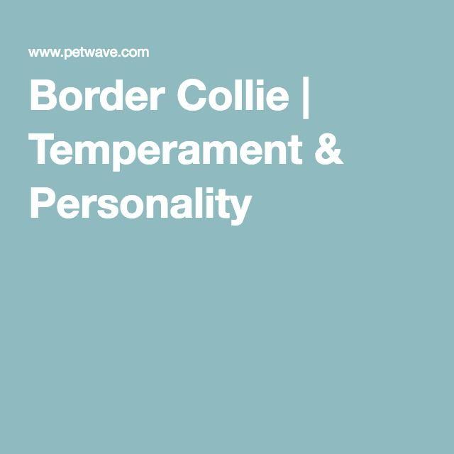 Border Collie | Temperament & Personality