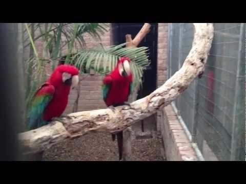 Parrots Dance To Rap Song - ha!!