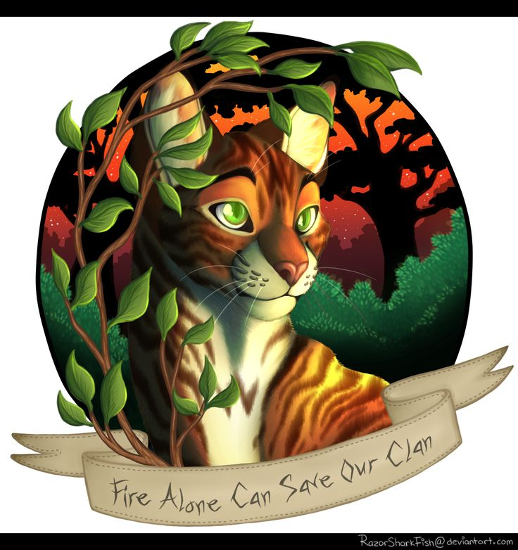 Warriors Into The Wild Full Movie: 956 Best Warrior Cats Images On Pinterest