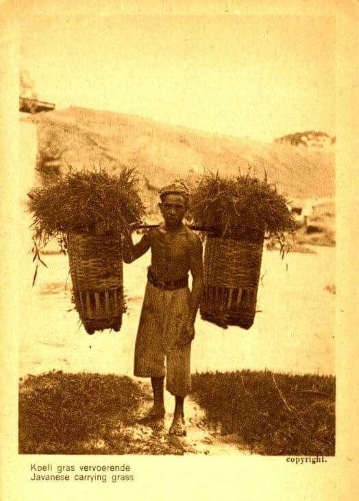 Mengangkut rumput, 1910 ( koleksi KITLV)