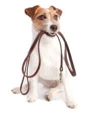 Dog Obedience Training... DogSiteWorld Store - http://dogsiteworld.com/dog-obedience-training/