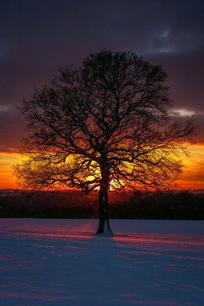 ✯ Winter Sun