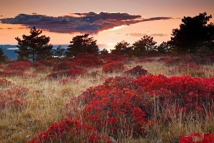 """Le foglie di sommaco infiammano l'autunno sul carso (foto dalla mostra """"Carso"""" di Ervin Skalamera e Roberto Valenti"""