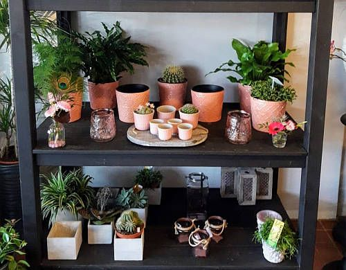 Interieur planten design