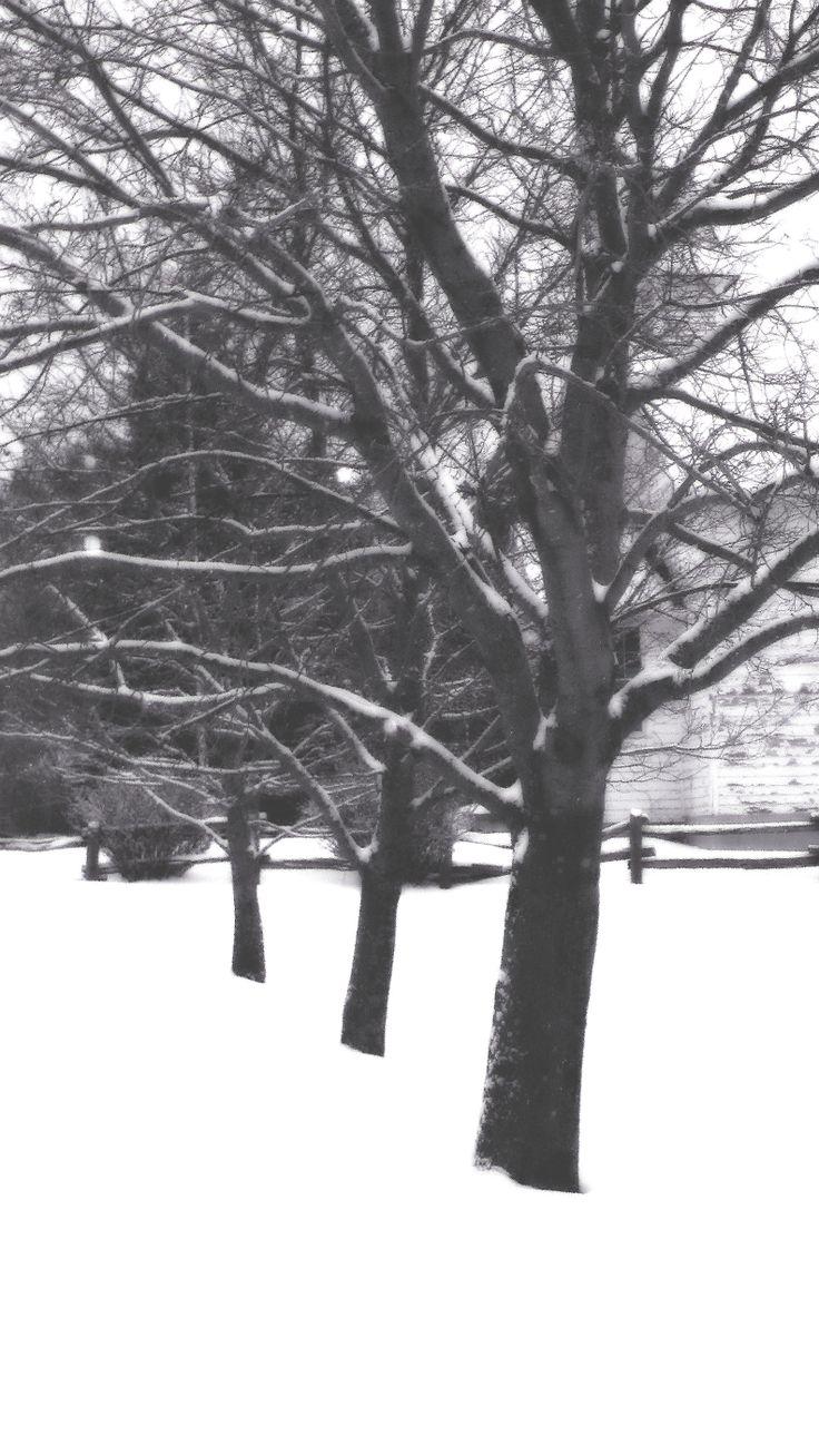 Darken tree line