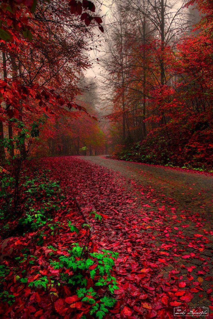 passion path ... - Bolu Turkiye