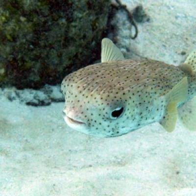 1000 images about the underwater world 2 on pinterest for Caribbean reef fish