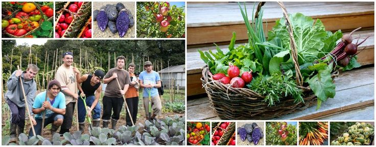 » Community Gardens Directory Grow Together