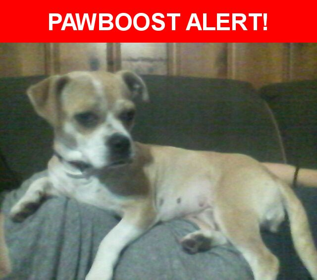 Please spread the word! Ginger was last seen in San Antonio, TX 78205.  Description: She is a small boxer/terrier mix, she is currently in heat so she may be swollen down there. She is wearing a faded pink collar and flea collar  Nearest Address: 849 East Commerce Street, San Antonio, TX, United States