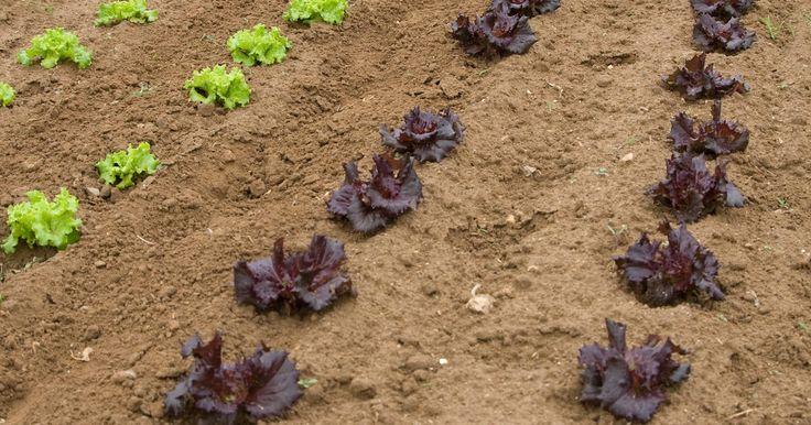 Ejemplos de tipos de suelo. El suelo se compone de materiales inorgánicos, incluyendo arena, limo y arcilla, y materiales orgánicos, tales como los virus de levaduras, y otros organismos vivos. El suelo es el medio por el cual el agua y los nutrientes son transferidos a las plantas. Los suelos varían en densidad y por lo tanto, su capacidad para mover eficazmente el agua y ...