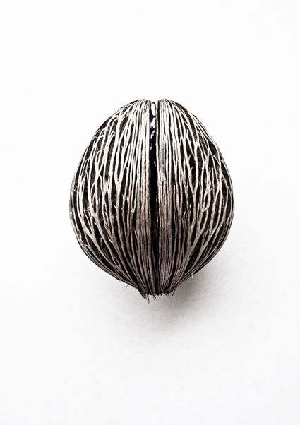 Pong Pong Seed ( Cerbera Odollam ) - this would make a cool piece of jewelry