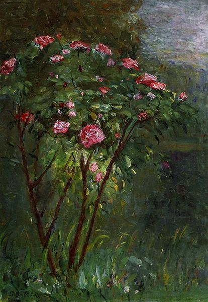 Rose Bush in Flower, 1884 by Gustave Caillebotte. Impressionism. flower painting. Private Collection