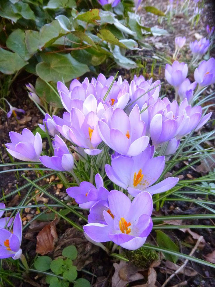 Words and Pictures: Les Fleurs, Les Fleurs