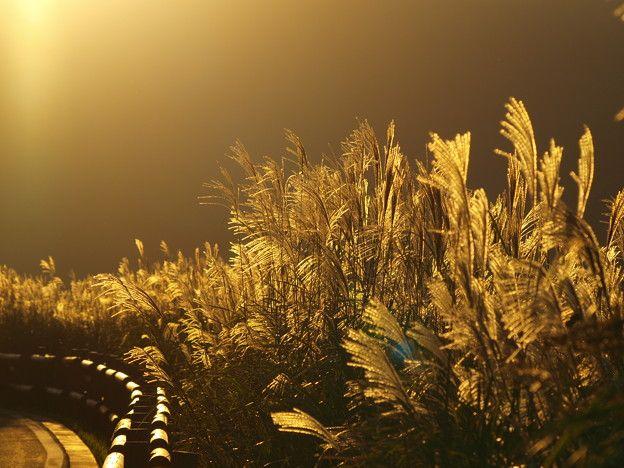 フォト蔵で箱根ガラスの森美術館さんが共有している写真「箱根仙石原_すすき草原_1」です。フォト蔵はスマートフォンやデジタルカメラで撮った写真を簡単に投稿・共有できるフォトアルバムサービスです。