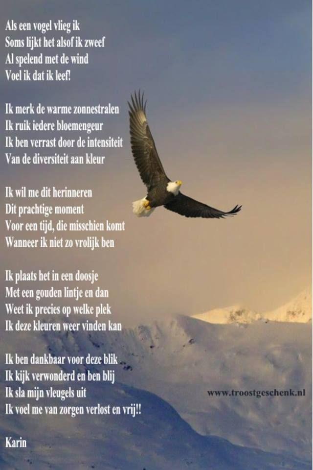 Als een vogel zweef ik!