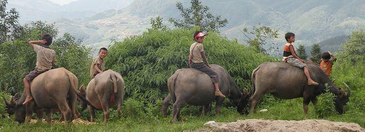 Découvrez les rizières de Sapa et le Delta du Mekong entre Solos - Les Covoyageurs