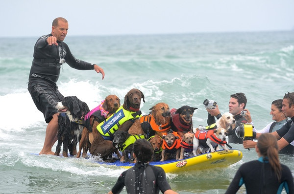 Woof Woof Waves: 50 Dogs Compete in Annual Surf Competition - Imperial Beach, CA Patch