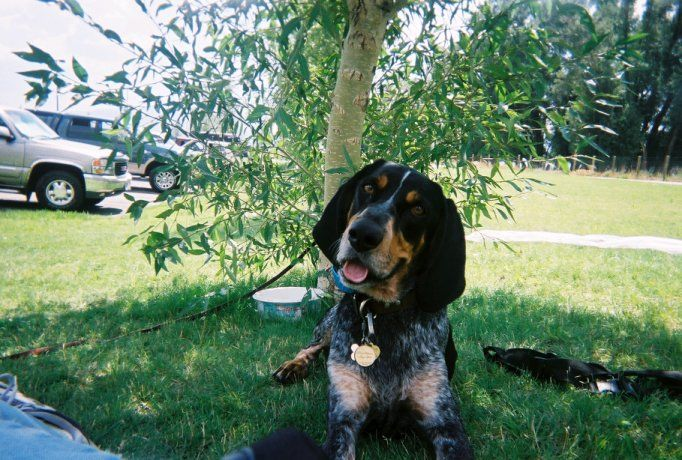 Precision k 9 dog training boise idaho for Precision dog training