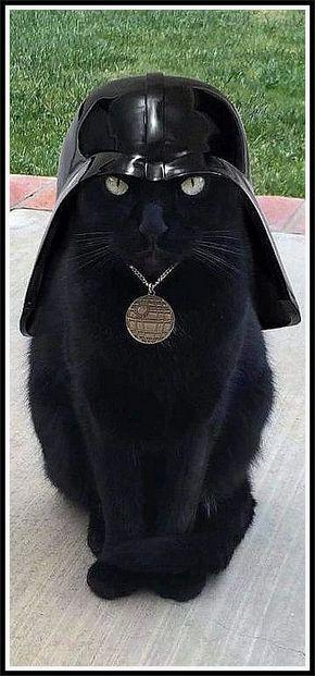 black cat ..... star wars Darth Vader #by آلورد آلأحمر #pet pets animal animals cats kitty kitten funny cute adorable nature