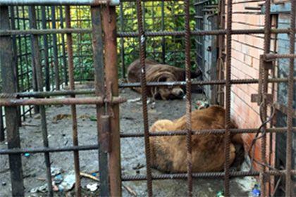 """""""Медведи-алкоголики из Сочи отправятся на реабилитацию в Румынию"""". Мы могли бы быть с ними. """"Планируется, что животные морем будут перевезены в румынский порт Констанцу, а оттуда их переправят в Медвежий парк. Отмечается, что у сотрудников парка, где функционирует реабилитационный центр, накоплен большой опыт работы с больными животными. В частности, специалисты центра работали с медведями, которых заставляли танцевать."""" Я ДОЛЖЕН ТАНЦЕВАТЬ."""