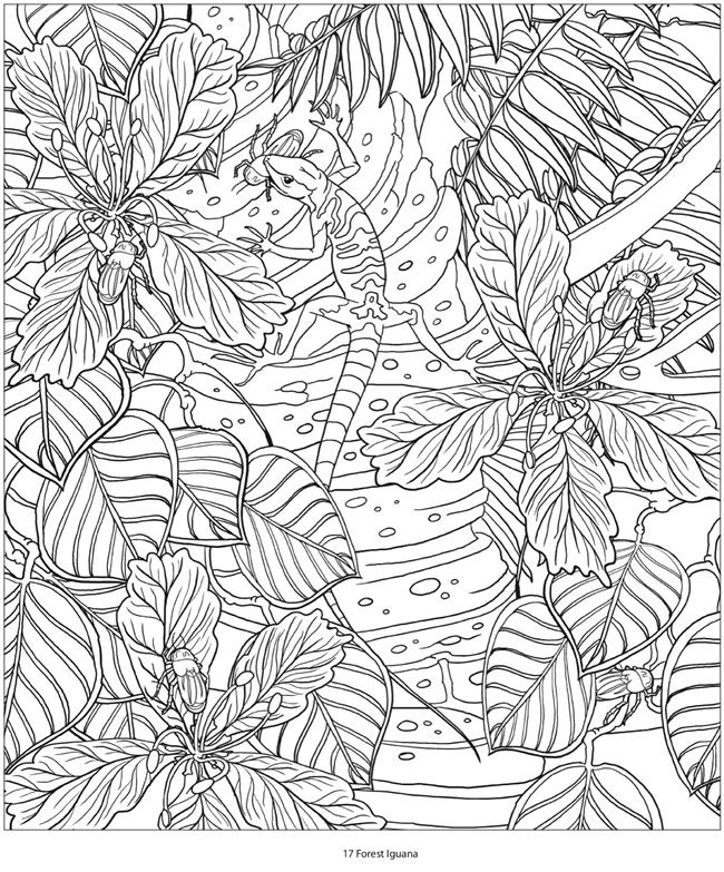 Creative Haven AMAZON ANIMALS A Coloring Book with a Hidden Picture ...