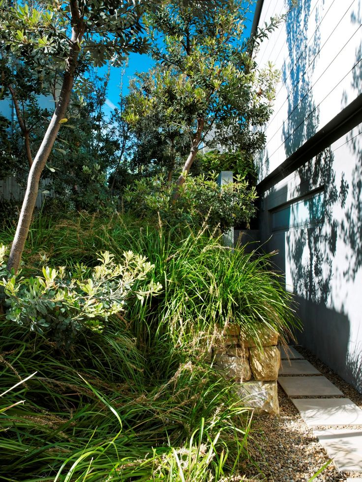 Lomandra and steppers