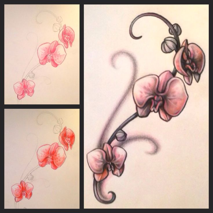 orchid rib tattoo idea i drew out orchids pinterest. Black Bedroom Furniture Sets. Home Design Ideas