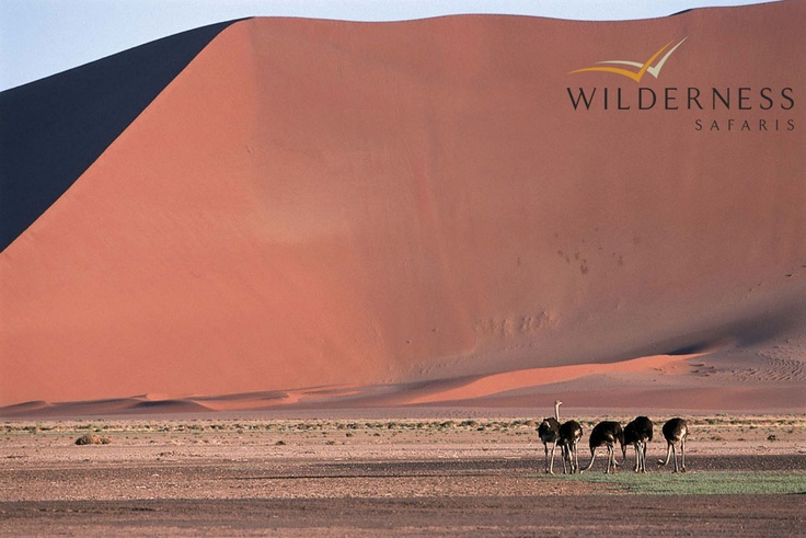 Little Kulala - Sossusvlei is situated within the Namib Desert, the oldest desert in the world, which itself is part of the Namib Naukluft National Park that stretches 400km south of Walvis Bay and is sandwiched between the west coast and the escarpment that runs parallel more than 100km inland. Its huge dunes and flat valley floors make up the archetypical view of the Namib that is world famous. #Safari #Africa #Namibia #WildernessSafaris