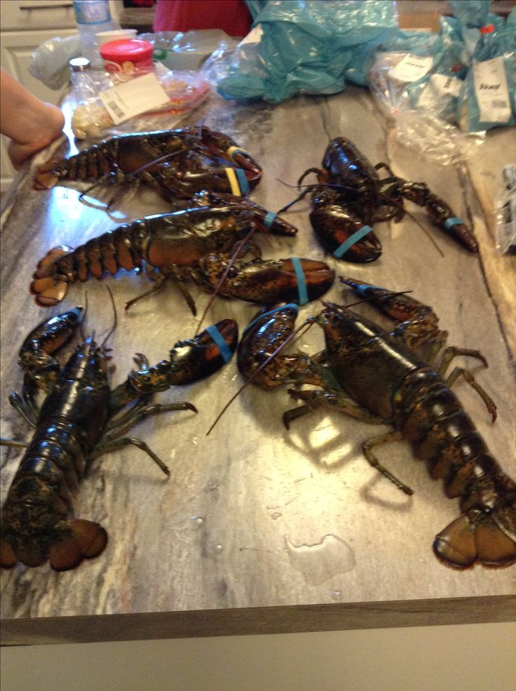 Being from Nova Scotia you can't have too many lobsters. Even though I don't like them.