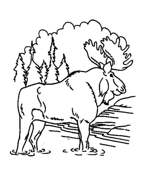32 Best Johns Retirement Images On Pinterest Coloring Sheets Moose Coloring Page