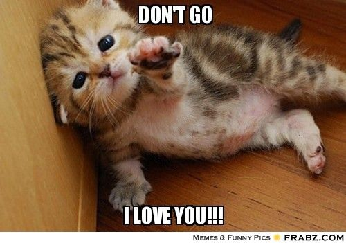 Don't Go I Love You!