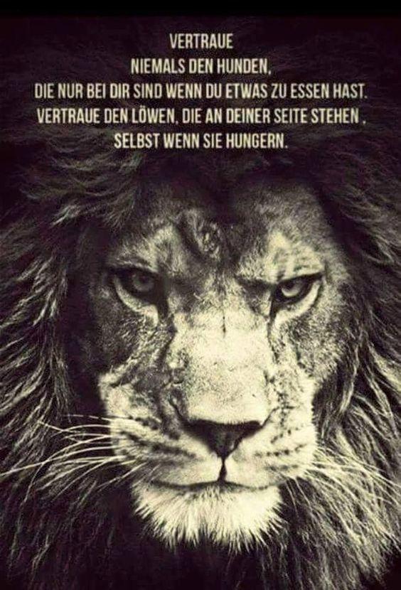 #Zitate #Löwe #Bilder